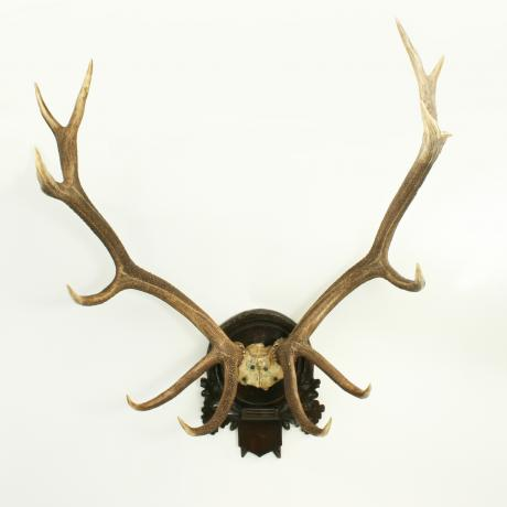 25556 Red Deer Antlers.