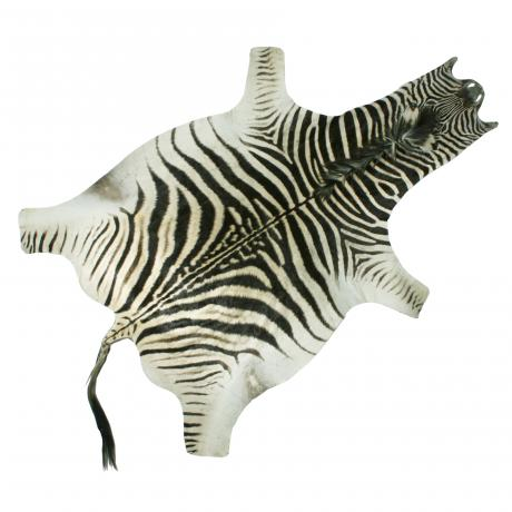 26020 Antique Taxidermy Zebra Skin.