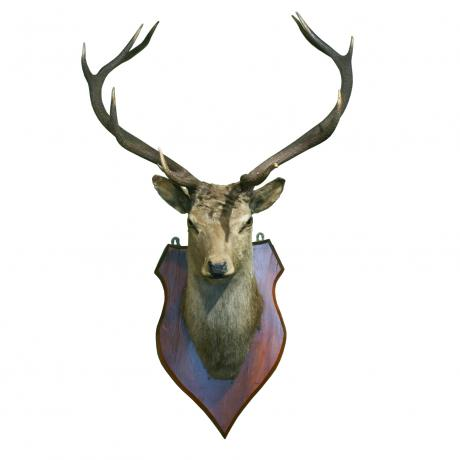 26043 Vintage Taxidermy, Stags Head.