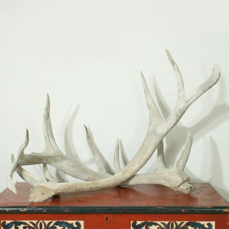 26214 Vintage Taxidermy, Large Antlers.