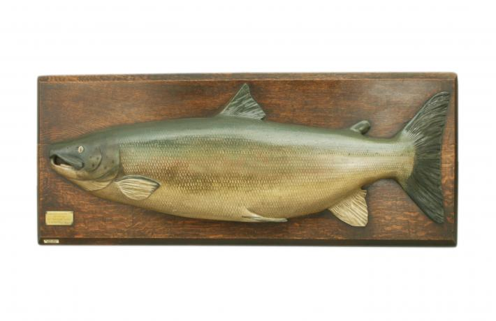26604 Hardy Salmon Trophy Fish Model.